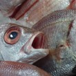 Stock Photo: Astonished gilthead (dorade) on ice on stall of seafood market