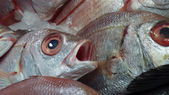 Astonished gilthead (dorade) on ice on the stall of a seafood market — Stock Photo