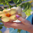Golden allamanda flower — Stock Photo