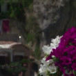 From petunias to Positano — Stock Video #26131281