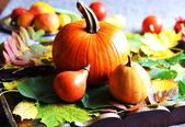 Autumn vegetable — Stock Photo