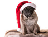 New Year Pug 2 — Stock Photo