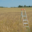 Stepladder in the field — Stock Photo