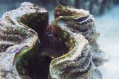 Sea shell on the bottom of the sea — Stock Photo