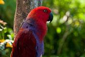 Vackra porträtt av röd papegoja — Stockfoto