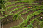 Green Rice terraces view — Стоковое фото