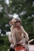 маленькая обезьяна — Стоковое фото