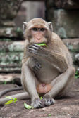 Monkey with leaf — Stock Photo