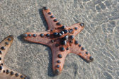 Several Starfish is lying on the white Sand - closeup — Stockfoto