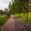 Road in autumn park — Stock Photo #36338629