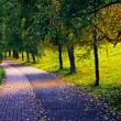 Road in the park — Stock Photo #36338653