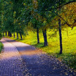 Stock Photo: Road in the park