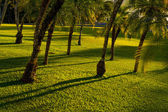 Several palms on grass meadow — ストック写真