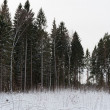 Forest at winter — Stock Photo #44432771