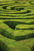 Spiral maze — Stock Photo