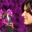 Attractive gardener woman cutting flowers with secateurs — Stock Photo