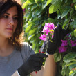 Beautiful gardener woman cutting flowers with secateurs — Stock Photo