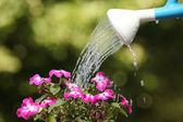Water can watering a flower plant — Stock Photo