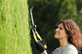 Zblízka zahradník ženy prořezávání cypřiš — Stock fotografie