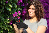 Gardener woman cutting a pink flower with secateurs — Stock Photo