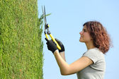 Gardener woman pruning a cypress with pruning shears — Stock Photo
