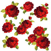 The bouquet of the rose — Stock Vector