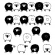 Material of pretty sheep, — Stock Vector #40583399