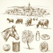 Farm animal, rural village - hand drawn collection — Imagen vectorial