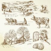 Wiejski krajobraz, rolnictwo, uprawa — Wektor stockowy