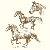 Hand drawn horses — Stock Vector