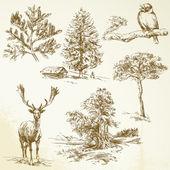 Orman, hayvan, doğa — Stok Vektör