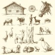 Farm - hand drawn collection — Vector de stock