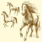 Wild horses — Stock Vector #13784096