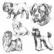 Dogs - hand drawn collection — Stok Vektör #13784354