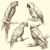 Hand drawn parrots — Stock Vector
