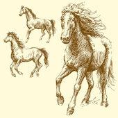 Dzikich koni rasy — Wektor stockowy