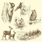Forest animals — Stockvector