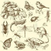 Bahçe hayvan, böcek — Stok Vektör