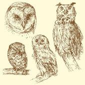 Hand drawn owls — Stock Vector