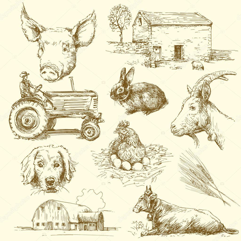 农场动物-手工绘制的集合