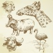 Wild animals - hand drawn set - 图库矢量图片