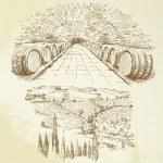 Vineyard - hand drawn set — Stock Vector