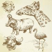 Wild animals - hand drawn set — Stock Vector