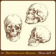 Human skull - hand drawn vector illustration - Stock Vector