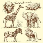 Wild animals — Stock Vector