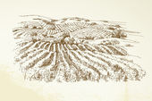 Paisaje del viñedo - ilustración dibujados a mano — Vector de stock