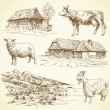 图库矢量图片: Rural landscape, village, farm animals