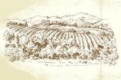 Vineyard France - hand drawn illustration — Stock Vector