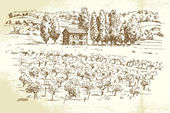Landscape, vineyard - hand drawn illustration — Stock Vector