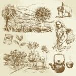Tea plantations - hand drawn set — Stock Vector #35787607